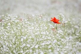 En anderledes blomst